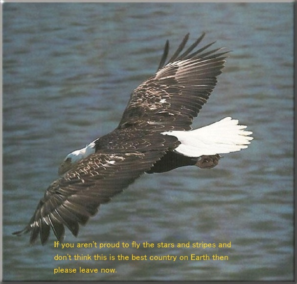 BaldEagle_132-In_flight_on_water - Copy